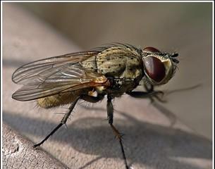 Fly by Olympus&NikonianRay