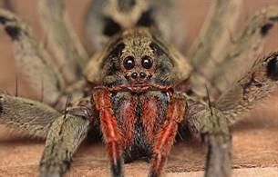 Unknown Spider by Maxwell Rocha