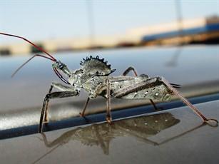 Wheelbug by Bug Zero