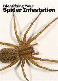 Identifying Your Spider Infestation