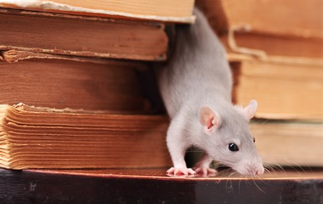 Rat in books