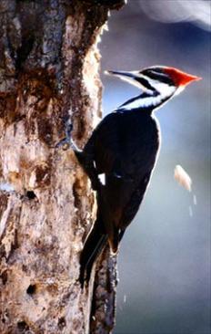 Media 35985 Get Rid Of Woodpeckers