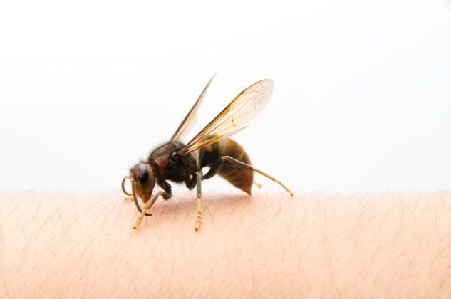 Stinging Insects: How to Treat a Bee Sting – PestWorld