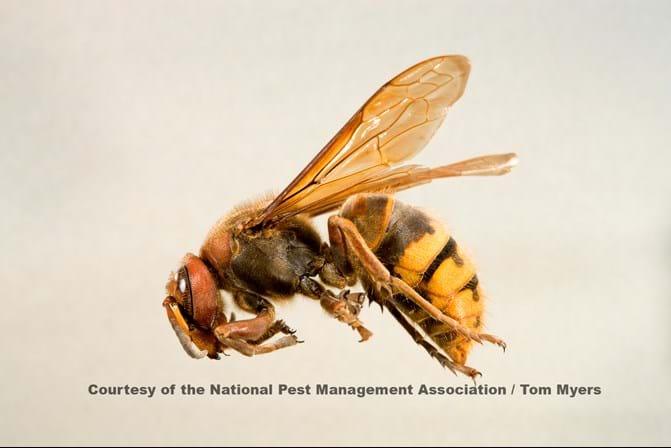 Types of black wasps - photo#37