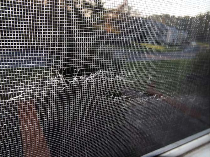 Tear in Window Screen