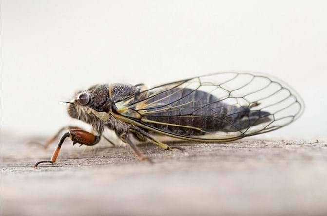 Cicada by Mary Faber