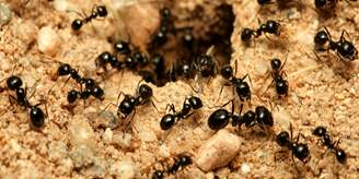 Ant Identification Guides: Ant Control & Extermination