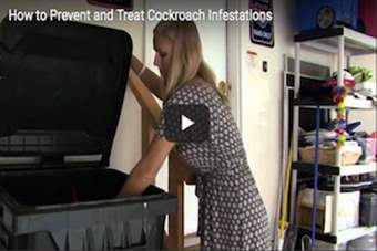 How to Prevent and Treat Cockroach Infestations.png