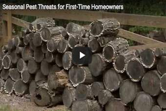 Seasonal Pest Threats for First-Time Homeowners.png
