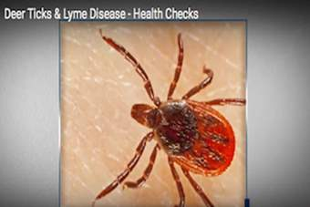 Health Checks - Deer Ticks & Lyme Disease.png