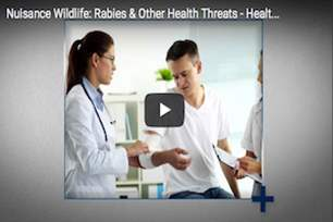Health Checks - Rabies and Other Nuisance Wildlife Threats.png