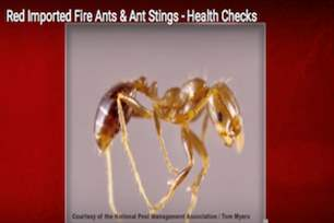 Health Checks - Red Imported Fire Ant Stings.png