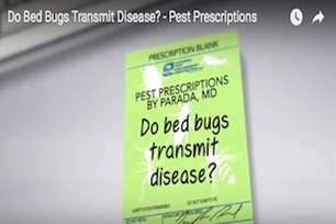 Pest Prescriptions - Do Bed Bugs Transmit Disease?.png