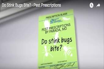 Pest Prescriptions - Do Stink Bugs Bite?.png