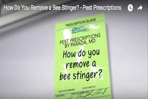 Pest Prescriptions - How Do You Remove a Bee Stinger?.png