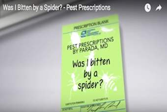 Pest Prescriptions - Was I Bitten by a Spider?.png