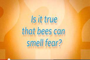 Can bees smell fear?.png