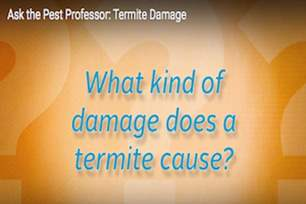 Do termites cause property damage?.png