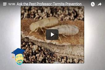 Is there anything I can do to prevent a termite infestation?.png