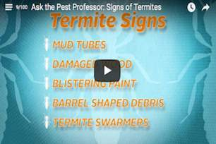 What are some signs of a termite infestation?.png