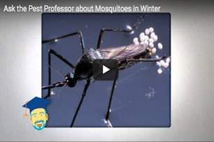 Where do mosquitoes go in the winter? .png