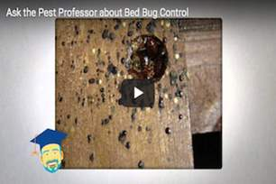 Why are bed bugs so hard to control?.png
