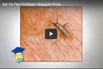Why are some people mosquito prone?.png