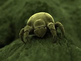 House Dust Mite Pest Control Management Information