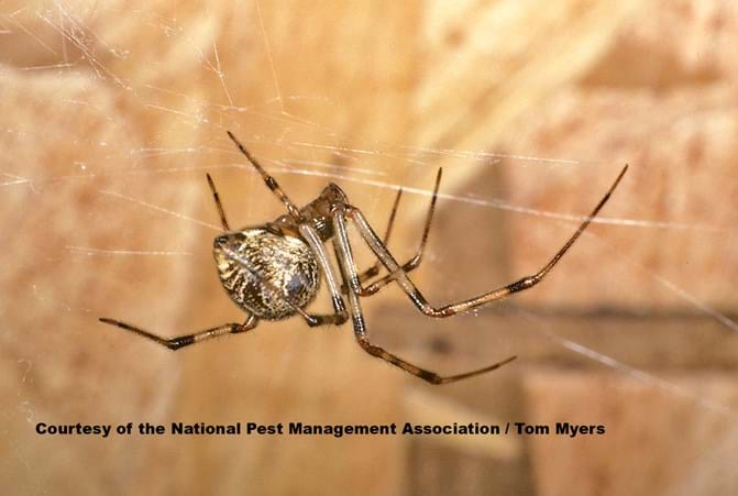 Spiders Seem To Be Getting More >> Spiders 101 Types Of Spiders Spider Identification