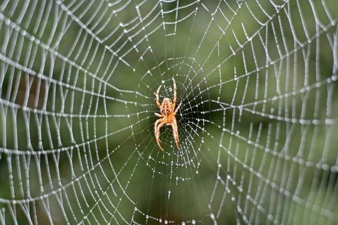 Image result for Spider Control