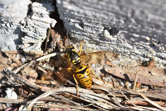 Everything You Need To Know About Yellowjackets Pestworld