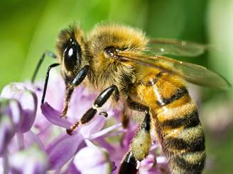 What does a bee look like up close