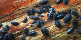 Several pill bugs on a wood surface