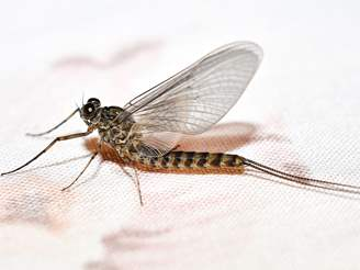 Mayfly Pest Control Guide: How to Get Rid of Mayflies