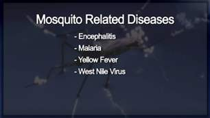 Mosquitoes and West Nile Virus.png