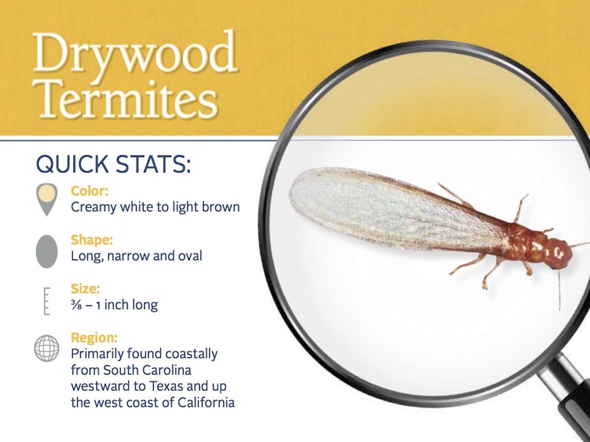 termite size - Mersn.proforum.co