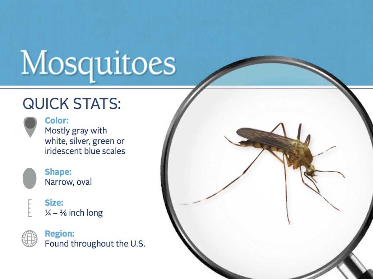 Mosquito Control Tips How To Get Rid Of Mosquitoes