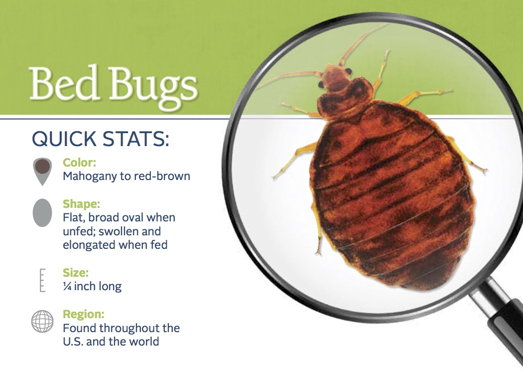 Where Do Bed Bugs Come From Identify Bed Bugs Bites