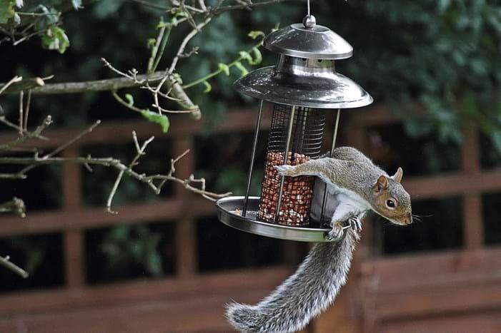 Squirrels 101: Facts, Photos & Information on Squirrels