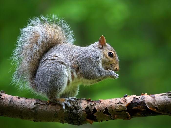 Squirrels 101 Facts Photos
