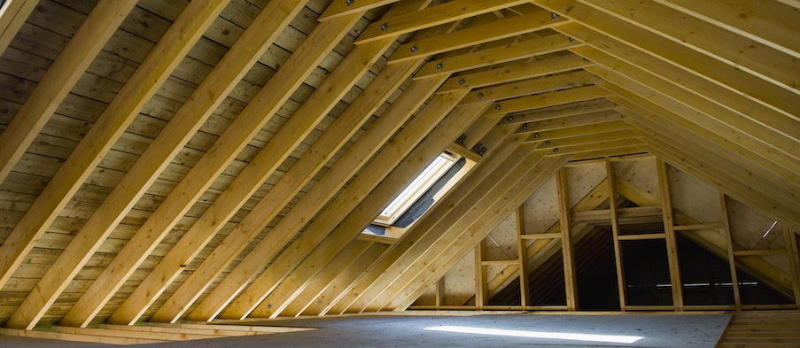 Attic Bugs Insects Pest Prevention Tips For Attic Bugs