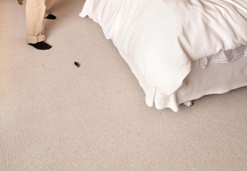 Bedroom Insects: Pest Control Info for Bugs in Bedroom